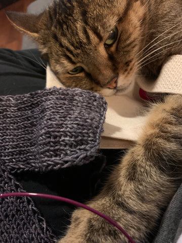 A turtle shell cat is looking at the camera from the top of the image.  His arm is reaching down the right side of the image to touch the gray knitting that is on the left side of the image.