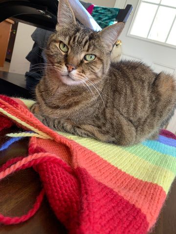 A knitted sweater in rainbow colors is lying on a bench with a brown, short haired cat sitting on top of it, looking directly at the camera.