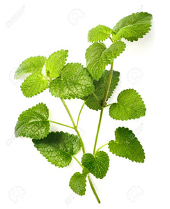 Lemon Balm  Essential Oil Organic
