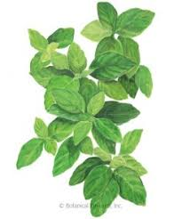 Basil Lemon