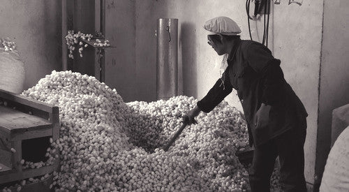 6. The farmers sell the completed cocoons to the factory for processing.