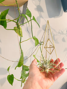 Double Air Plant Holder in Brass