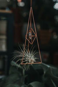 Double Air Plant Holder in Copper