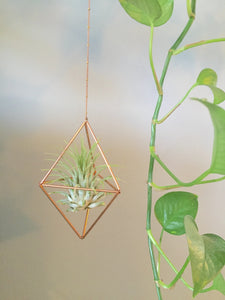 Diamond Air Plant Holder