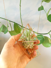 Load image into Gallery viewer, Diamond Air Plant Holder