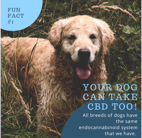 Dogs Also Have Endocannabinoid Systems