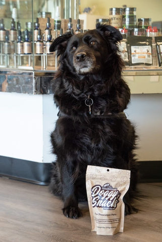 Lady the therapy dog who takes CBD for pain.