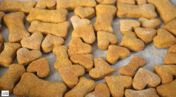 Pumpkin Dog Biscuits!