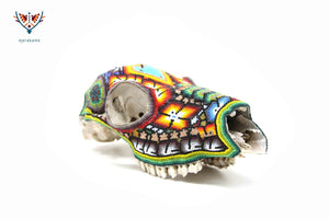 Authentic Deer Skull - Maxatsi wa'iyari - Huichol Art - Marakame