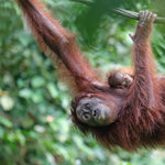 Against Palm Oil