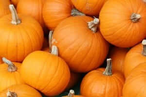 bake_these_pumpkins_in_toronto-1