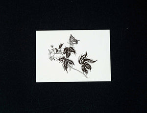 "10er Set  ""Swallowtail"" Postkarte by BugLady"