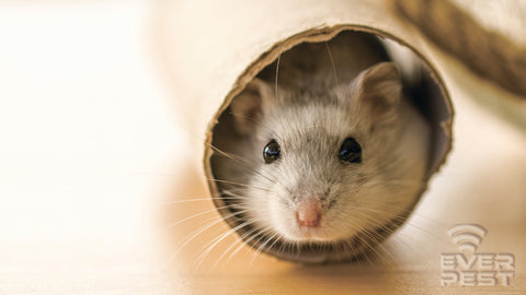How to fix the entryways for mice
