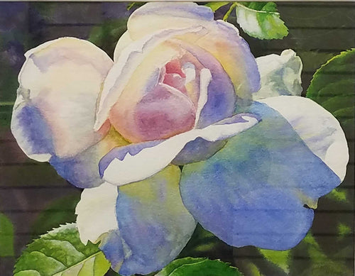 Painting: Radiant Rose Artist: Cathy Hillegas Medium: Watercolor Size: Framed