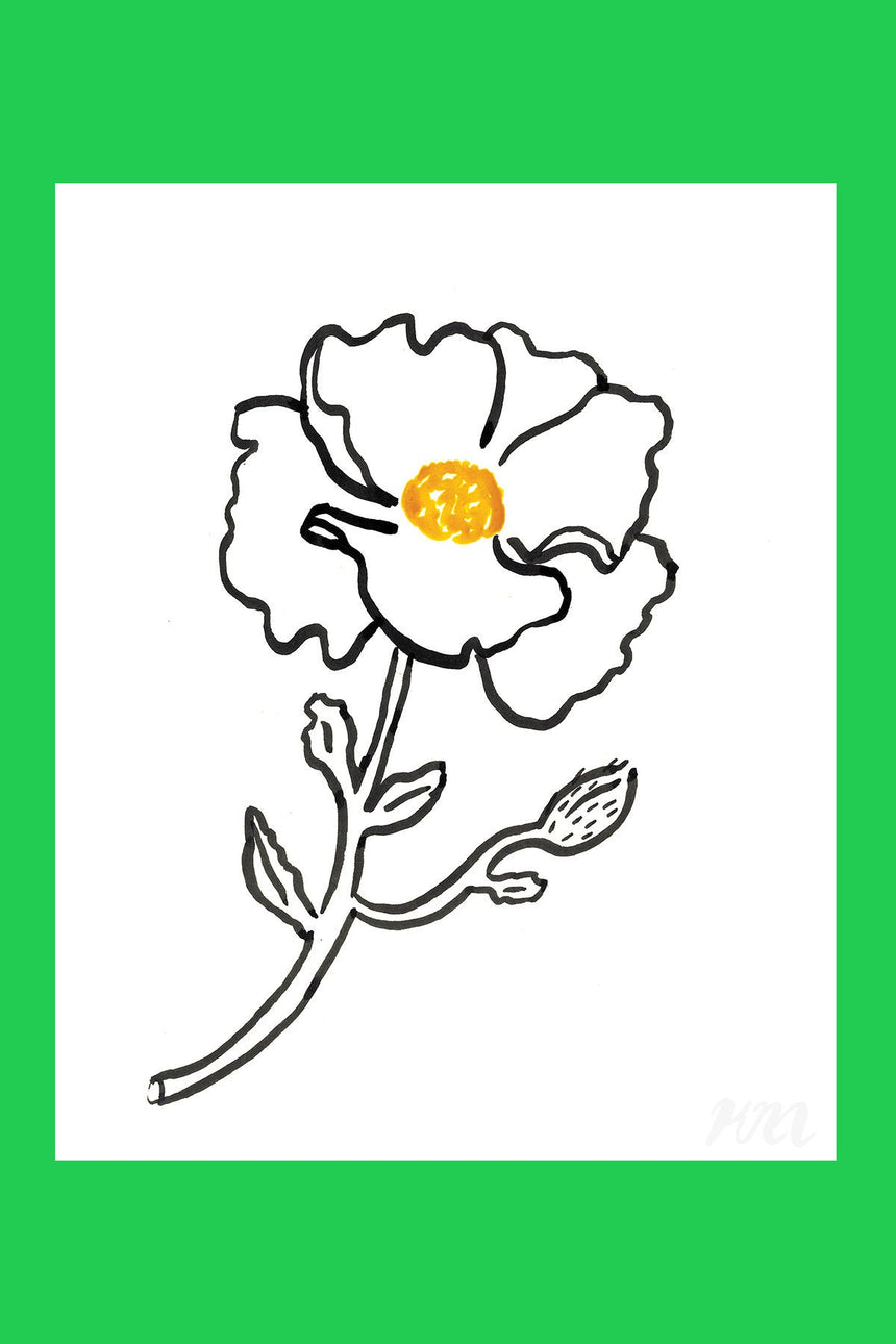 Fried Egg Poppy Plant Print