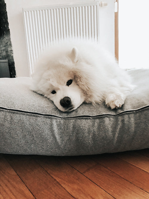 5 reasons dogs destroy beds and what to do about it