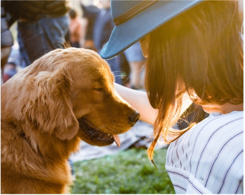 Top Summertime Dog Grooming Tips To Keep Your Dog Safe and Comfortable