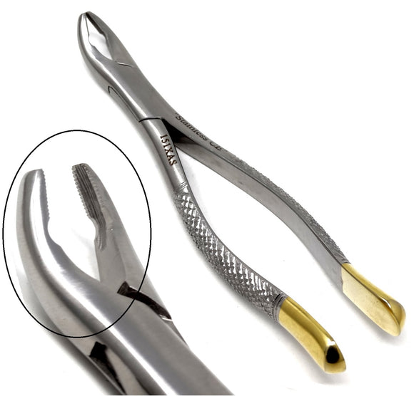 Dental Extraction Forceps 151XAS, Gold Handle, Stainless Steel