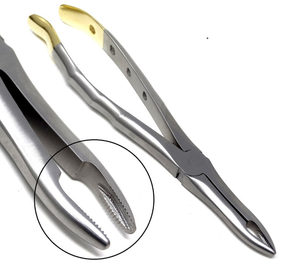 Dental Extraction Forceps #41, Gold Handle, Stainless Steel