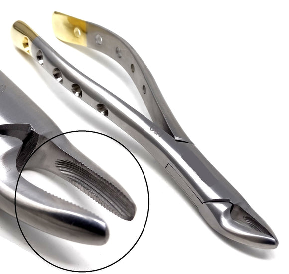 Dental Extraction Forceps #150, Gold Handle, Stainless Steel