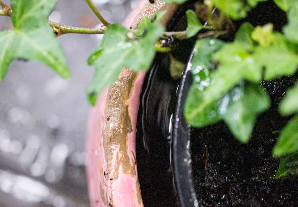 Watering Indoor & Potted Plants