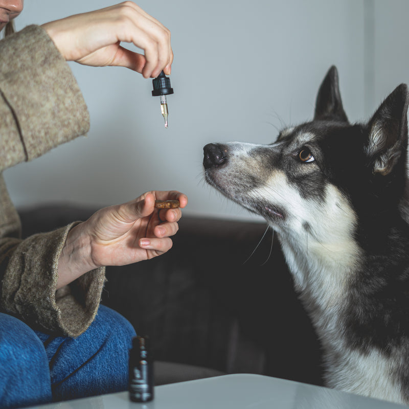 Back on Paws - 2,5% CBD oil for pets (250mg)
