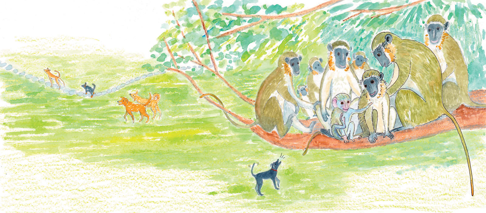 Monkeys with dogs below