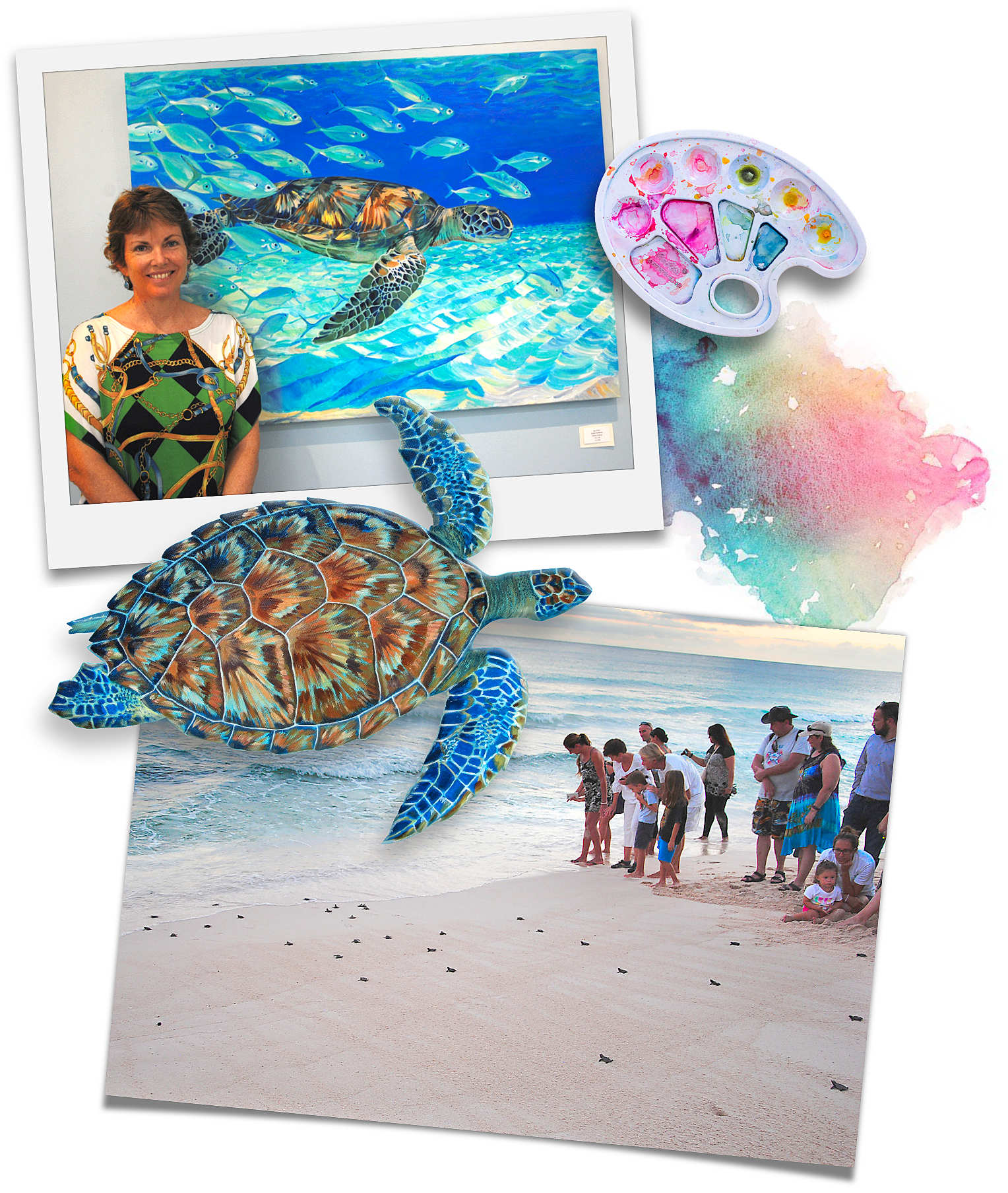 Sue's best turtle and hatchling release