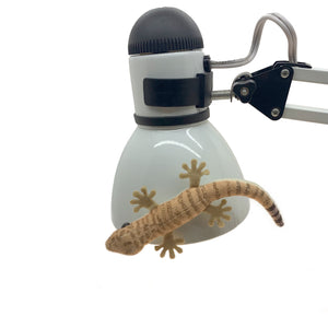 "Gecko Getaway: ""Gink"" Gecko Magnetic Plush Toy"