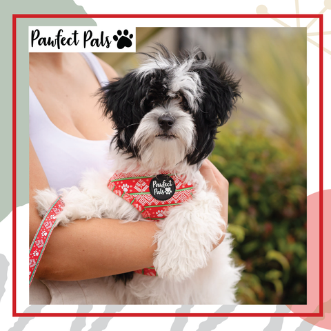 PawFect Pals Discount Code
