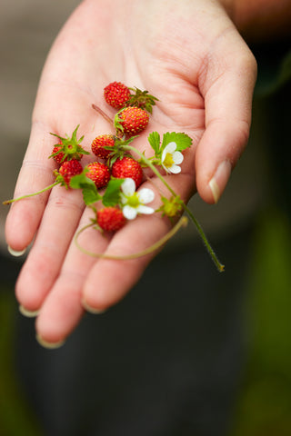 Dwarf mini Fruit and Vegetable that is suitable for your miniature tiny cooking