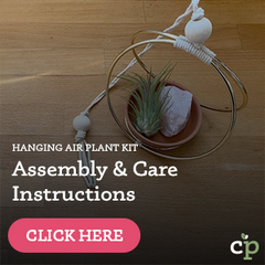 Hanging Air Plant Kit Assembly and Care Instructions