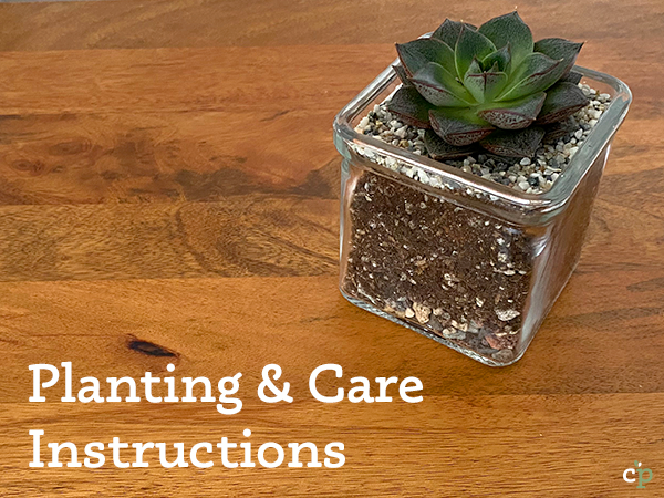 Succulent Planting and Care Instructions