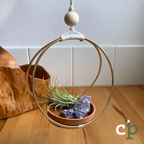 Hanging Air Plant Kit Macrame Amethyst