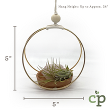 Load image into Gallery viewer, Hanging Air Plant Kit – Amethyst
