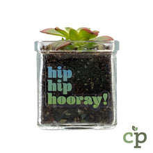 Load image into Gallery viewer, Mini Succulent Planter Kit Gift Hip Hip Hooray Cutieplants