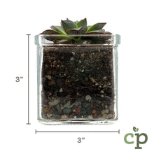 Load image into Gallery viewer, Cutieplants Succulent Glass Planter Dimensions