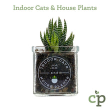 Load image into Gallery viewer, Cutieplants Succulent Glass Planter Indoor Cats and House Plants