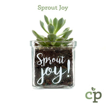 Load image into Gallery viewer, Cutieplants Succulent Glass Planter Sprout Joy