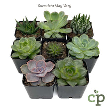 Load image into Gallery viewer, Cutieplants Two Inch Succulent Variety Succulent May Vary