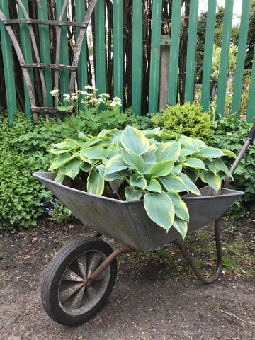 Vintage Galvanized Wheel Barrow