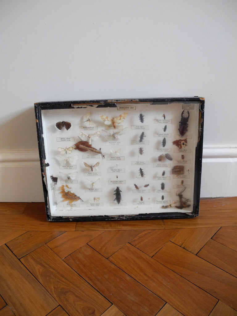 entomology collection Richter beetles moths caterpillars Czech