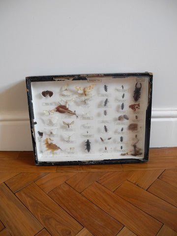 Entomology Collection I