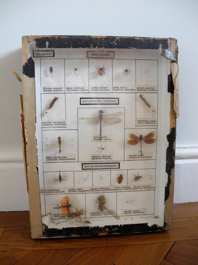 Entomology Collection Richter mounted spiders dragonflies Czech
