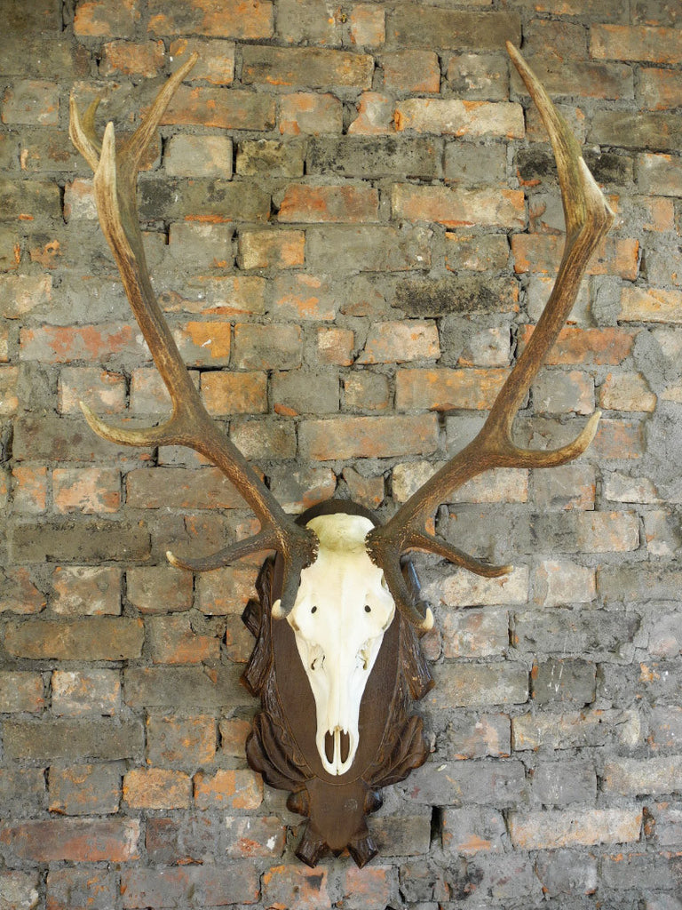Black Forest Style Antlers