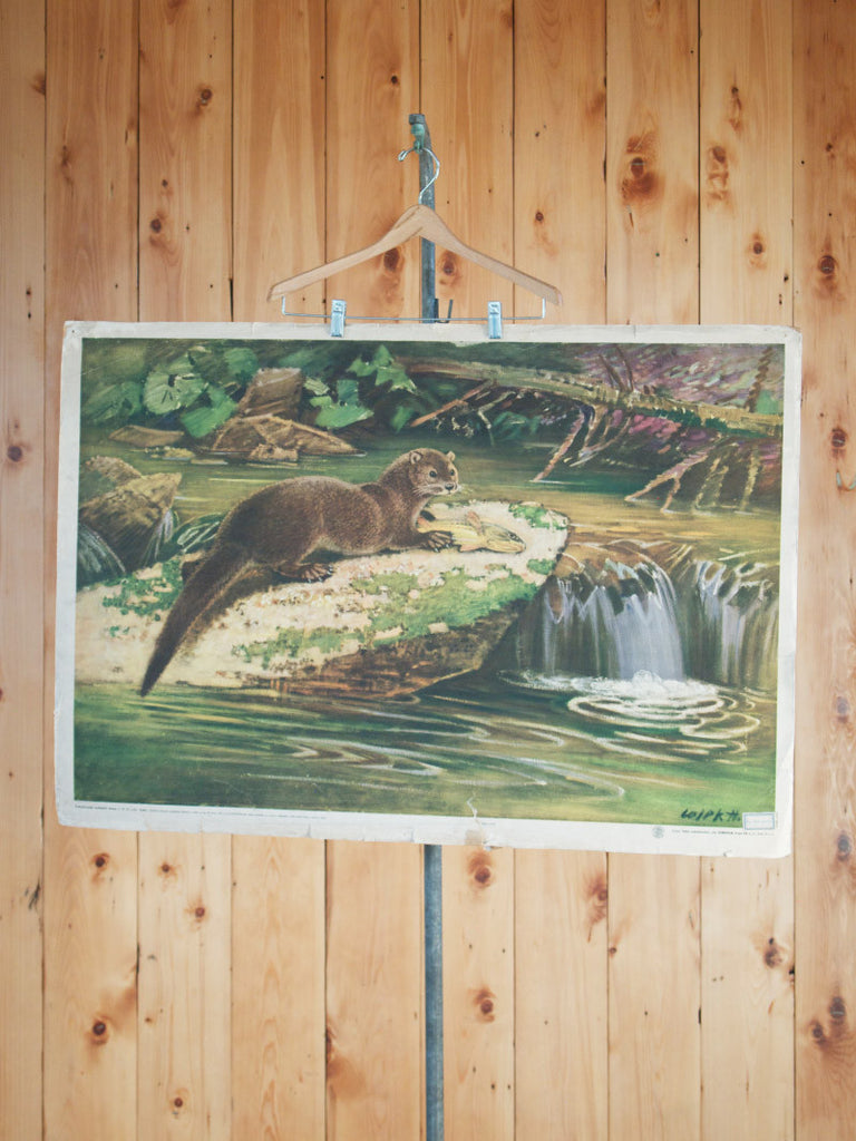 Illustrative Poster of a Otter