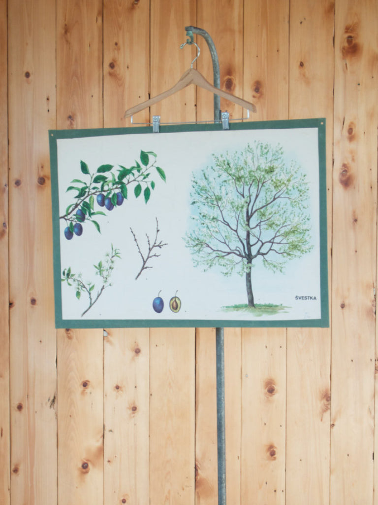 Botanical Poster Plum Tree