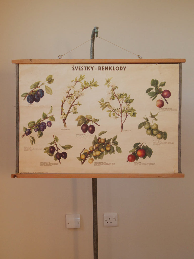Vintage Botanical Poster Plums Fruit