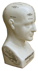 Medium ceramic phrenology head, 25cm