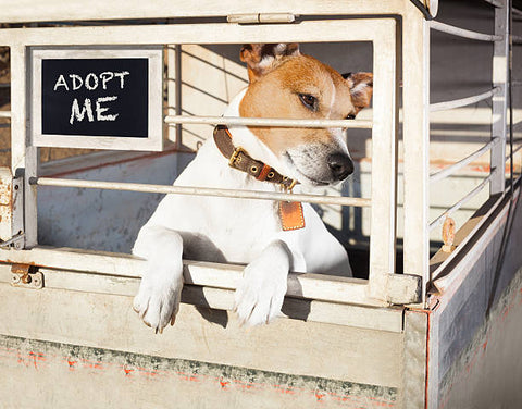 Adopt A Dog | Step By Step Process To Becoming A New Dog Owner